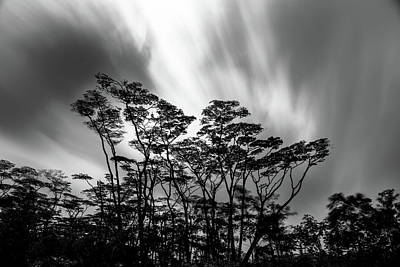 Photograph - Puna Tree Breeze by Mark Robert Rogers