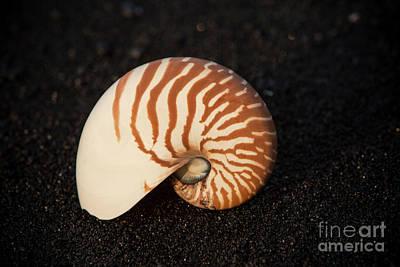 Photograph - Punaluu Beach 3 by Daniel Knighton