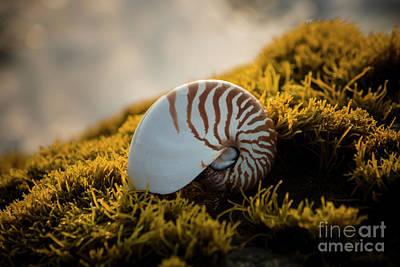Photograph - Punaluu Beach 4 by Daniel Knighton