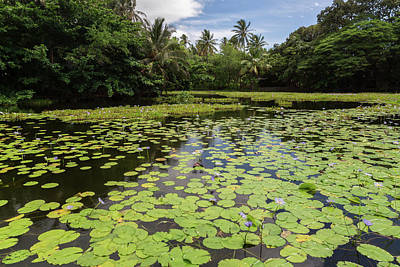 Photograph - Punalu'u Lily Pond by John Daly