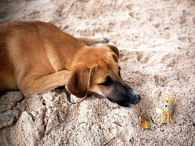Photograph - Pup And The Crab by John Rizzuto