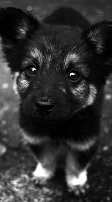 Photograph - Pup by Christopher Lugenbeal