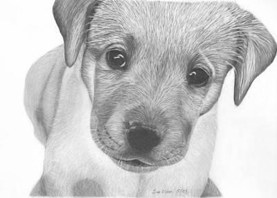 Pup Art Print by Sue Olson