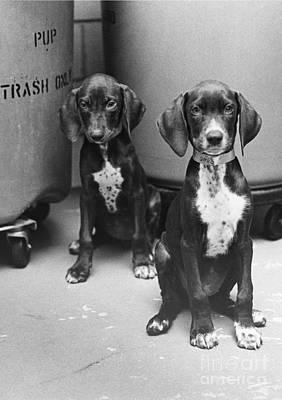 Animal Portraiture Photograph - Puppies by Lynn Lennon