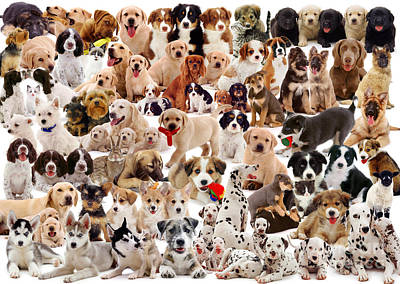 Photograph - Puppies Montage by Warren Photographic