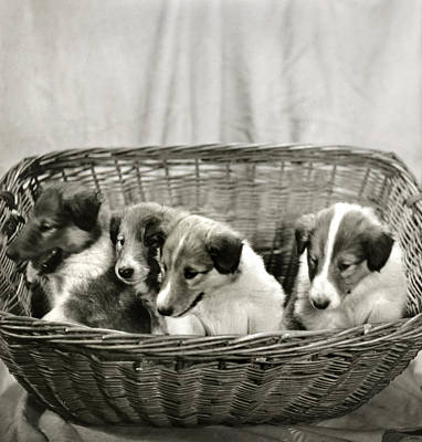 Puppies Of The Past Art Print by Marilyn Hunt