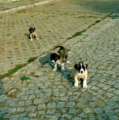 Puppies Mixed Media - Puppies Thinking by Ayse Belgin Bal