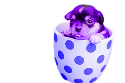 Tiny Dog Digital Art - Puppy by Acelin Smith