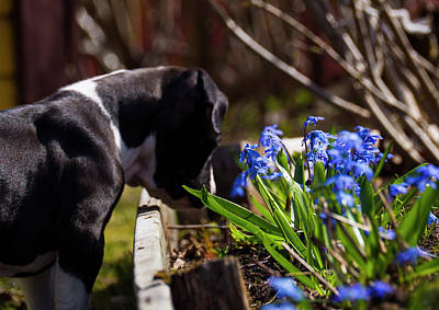 Puppy And Flowers Art Print
