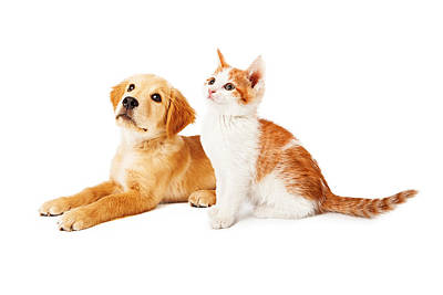 Full-length Portrait Photograph - Puppy And Kitten Looking To Side by Susan Schmitz