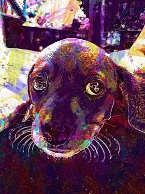 Dachshund Puppy Digital Art - Puppy Dachshund Big Eyes Animal  by PixBreak Art
