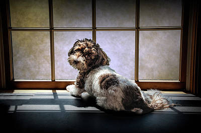 Photograph - Puppy Dog In The Widow With Sunlight by Randall Nyhof