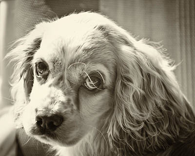 Dog Photograph - Puppy Eyes by Roger Wedegis