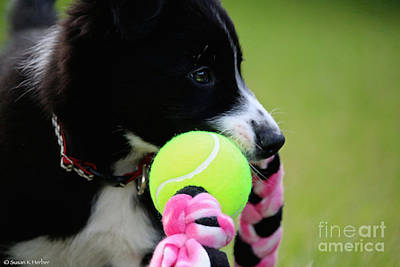 Photograph - Puppy Games by Susan Herber