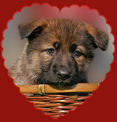 Puppy In Red Heart Art Print by Sandy Keeton