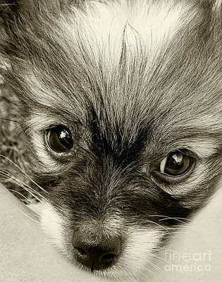 Puppy In Sepia By Kaye Menner Art Print by Kaye Menner