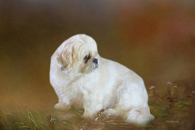 Photograph - Puppy In The Grass - Painting by Ericamaxine Price