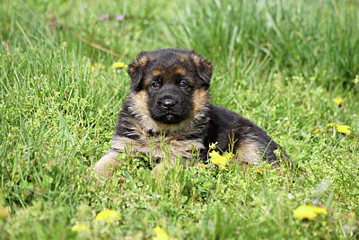 Photograph - Puppy In The Grass by Sandy Keeton
