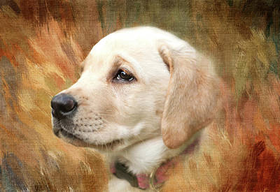 Puppies Mixed Media - Puppy In The Grass by Terry Davis