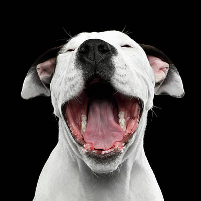 Photograph - Puppy Laughs by Sergey Taran