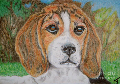 Drawing - Puppy Love Aceo by Yvonne Johnstone