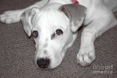 Terrier Digital Art - Puppy Love by Ella Kaye Dickey