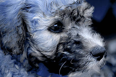 Terrier Digital Art - Puppy Love II by Cheryl Rose