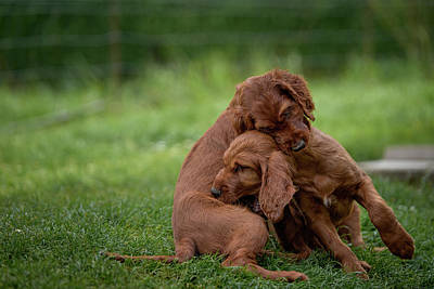 Photograph - Puppy Love by Robert Krajnc