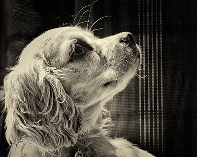 Animal Portrait Photograph - Puppy Love by Roger Wedegis