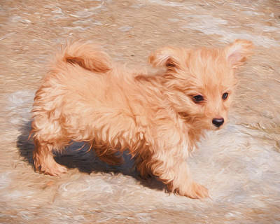 Homeless Pets Digital Art - Puppy Love by Roy Pedersen