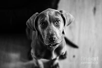 Photograph - Puppy - Monochrome 1 by Jesse Watrous