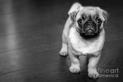 Photograph - Puppy - Monochrome 2 by Jesse Watrous