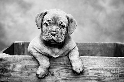 Photograph - Puppy - Monochrome 3 by Jesse Watrous