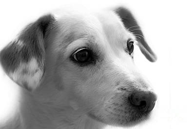 Photograph - Puppy - Monochrome 4 by Jesse Watrous