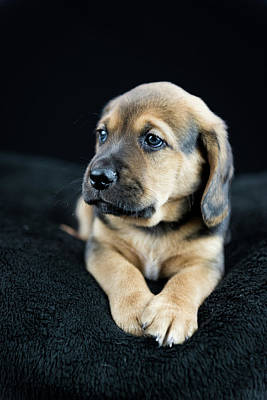 Photograph - Puppy Portrait by Tammy Ray