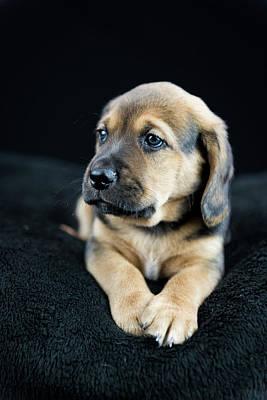 Puppy Portrait Art Print