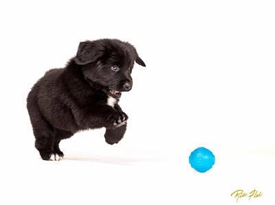 Photograph - Puppy Pounce by Rikk Flohr