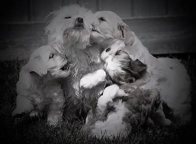 Photograph - Puppy Vignette by Lisa DiFruscio