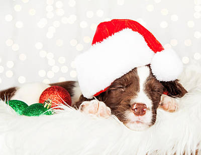 Puppy Wearing Santa Hat While Napping On Fur At Home Print by Susan Schmitz