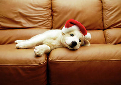 Puppy Wears A Christmas Hat, Lounges On Sofa Art Print