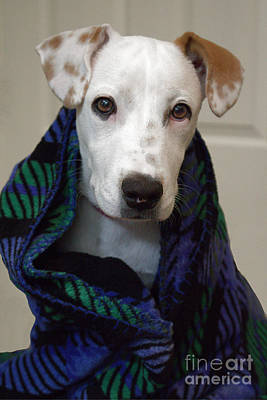Pups Digital Art - Puppy Wrapped In Blanket by Ella Kaye Dickey
