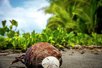 Art Print featuring the photograph Pura Vida Beach Life by David Morefield