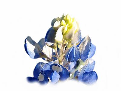 Pure Blue Bonnet Art Print