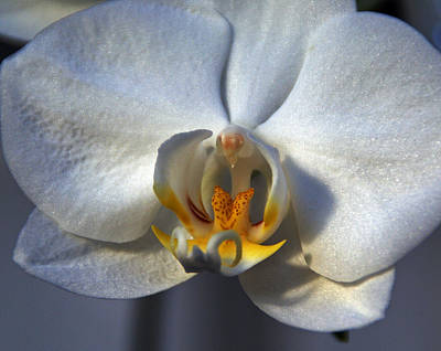 Photograph - Pure Form And Color by Lynda Lehmann