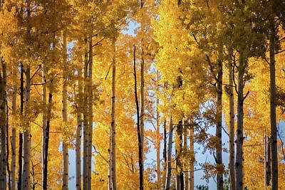 Photograph - Pure Golden Tree Tops  by Saija Lehtonen