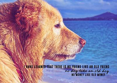 Photograph - Pure Joy Quote by JAMART Photography