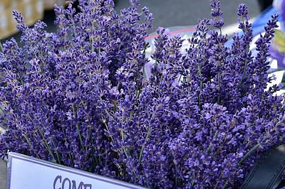 Photograph - Pure Lavender by Kim Bemis