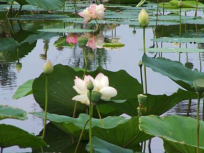 Pure Lotus Art Print by Vijay Sharon Govender