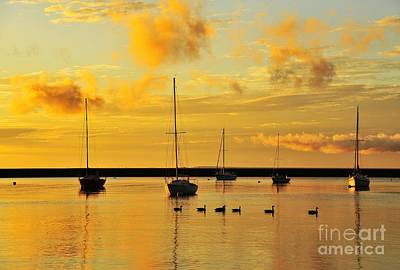 Photograph - Pure Michigan Gold by Terri Gostola