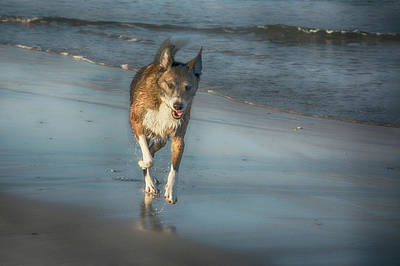 Pure Pleasure Photograph - Pure Pleasure - Dog On The Beach by Mitch Spence